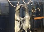 Sans titre ( Deux Caribous), 1990